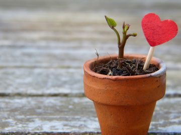 Social-Emotional Learning Informed Leadership Development